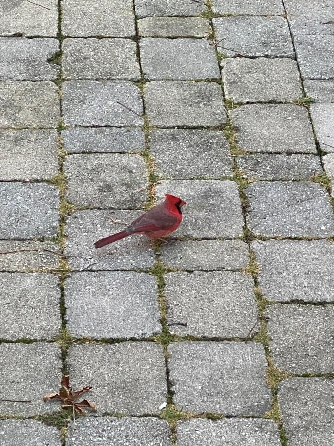Cardinal2020